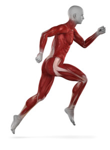 running-increase-bone-mass