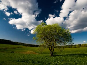 beautiful-beauty-nature-photography-pictures-wallpapers-Favim.com-547222